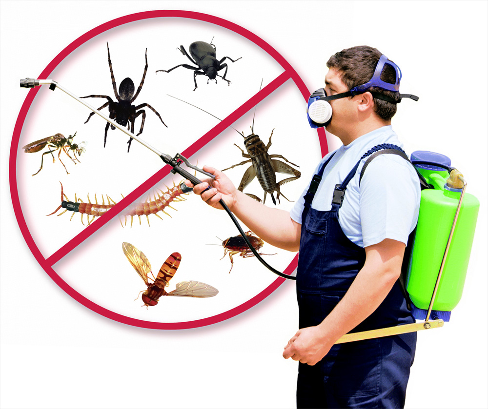 How Can Organic Pest Control Austin Benefit You The Most?