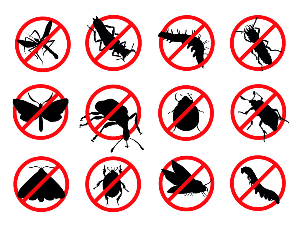 How to Identify a Termite Infestation in Your House?