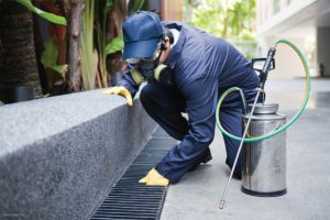Prevention Is Better Than Cure - Bed Bug Pest Control in Bronx NY