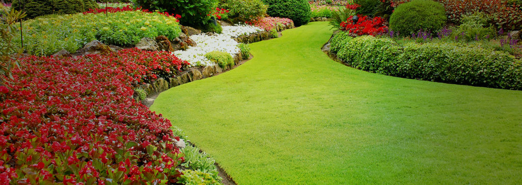 Some Of The Best Evergreen Shrubs For South Florida