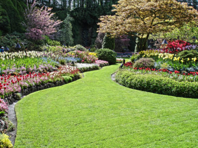 The Ultimate Guide to Planting and Maintaining Trees