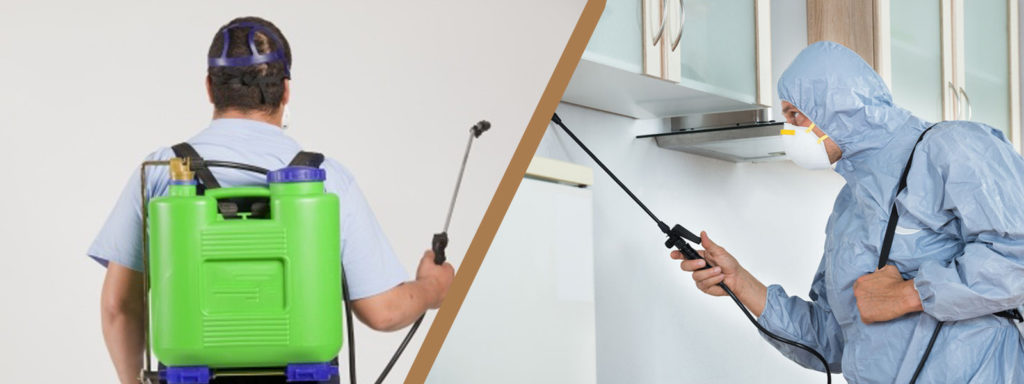 Tips to Effectively Eradicate Pest and Termites
